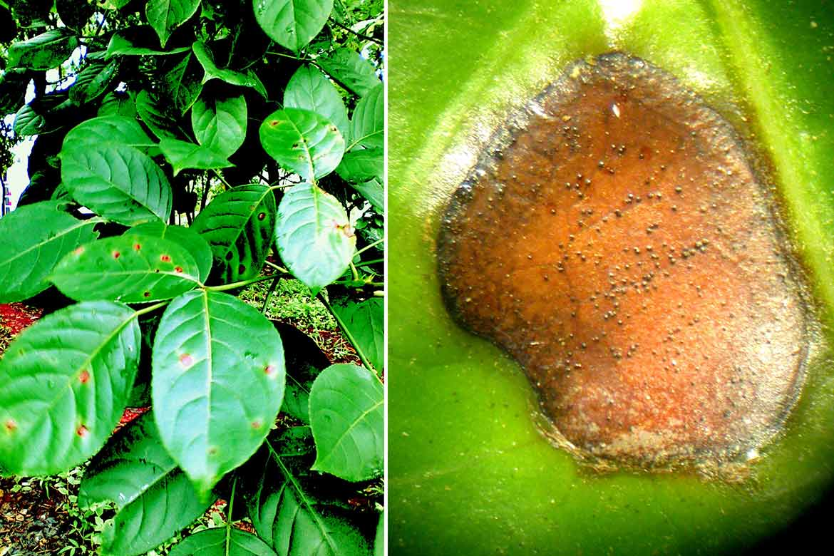 Online thesis of plant pathology